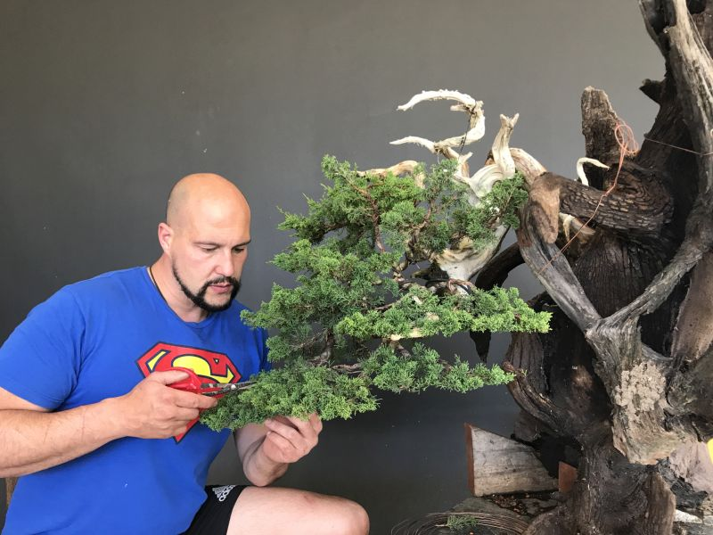 African Bonsai Association Home Page